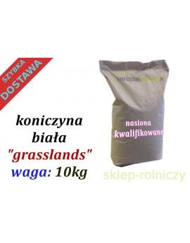 Koniczyna Czerwona PYZA 10kg